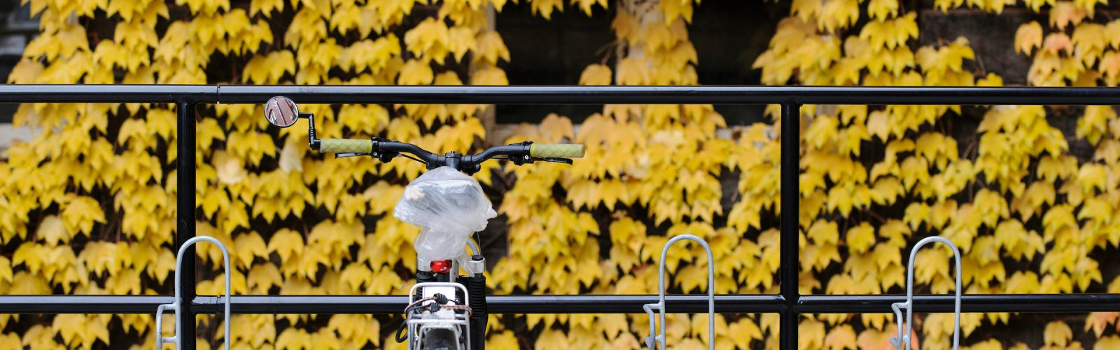 A bag-covered bicycle seat suggests rain may be in the forecast as yellow-colored ivy clings to the side of Science Hall at the University of Wisconsin-Madison during autumn on Nov. 8, 2013.